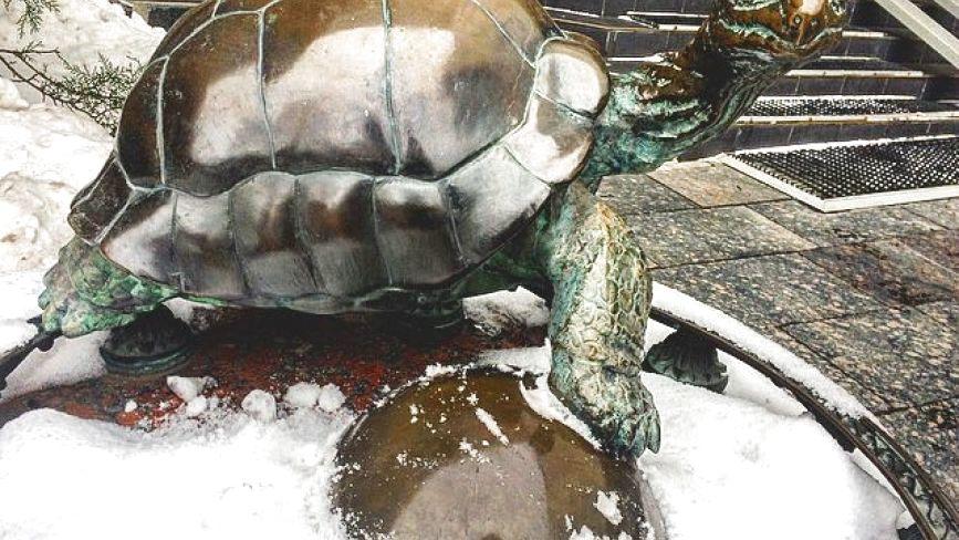 """""""Потерти на щастя"""". Подарована ректору черепаха допомагає студентам скласти іспити"""