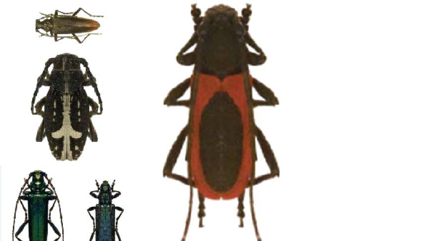 Зникаючі й рідкісні види: яких комах з Червоної книги знаходили на Хмельниччині