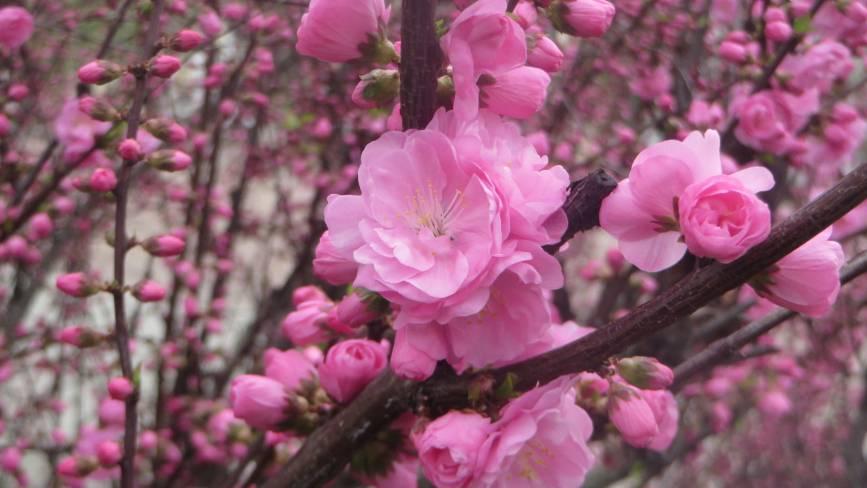 Як весна накрила цвітом Хмельницький (ФОТО)