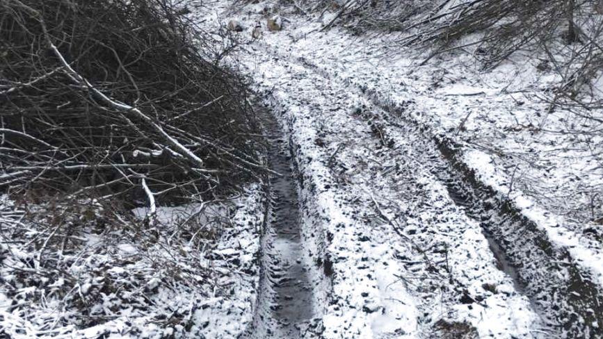 У Деражнянському районі вирубали дерев майже на мільйон гривень