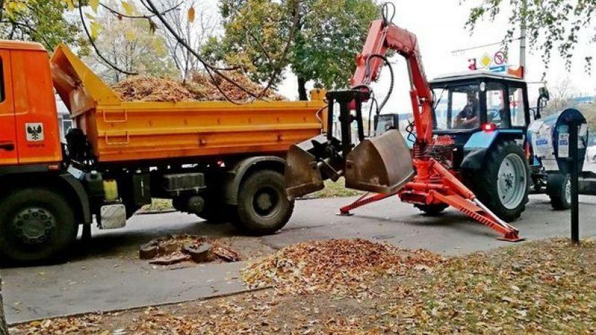 Щодня у Хмельницькому збирають 60 машин листя. Куди везуть та що з ним роблять