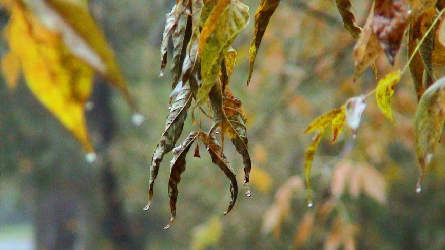 Дощі пройдуть від Заходу до Сходу: прогноз погоди на 28-29 вересня