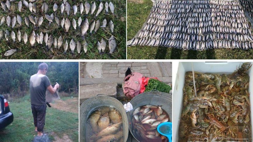На Хмельниччині браконьєри виловили риби на майже 90 тисяч гривень