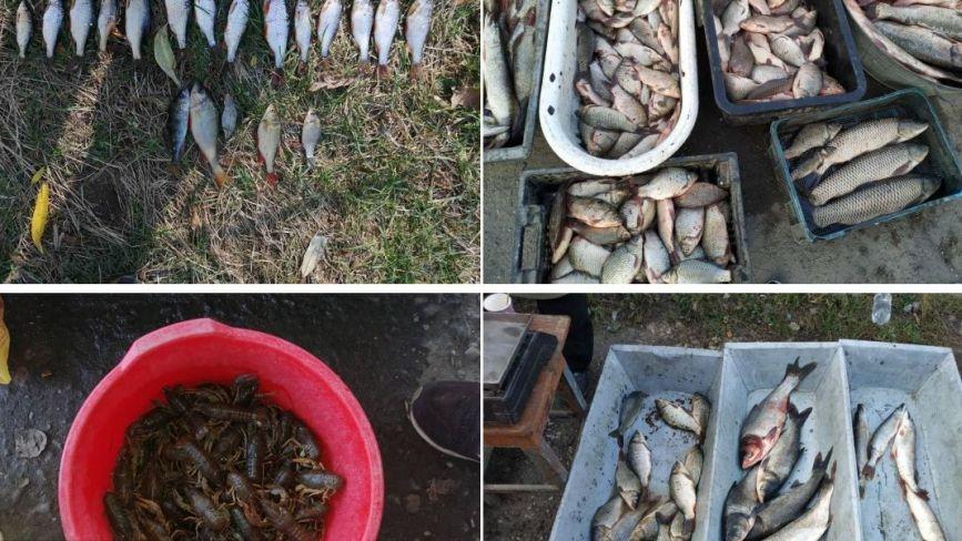На Хмельниччині у браконьєрів вилучили 150 кілограмів риби