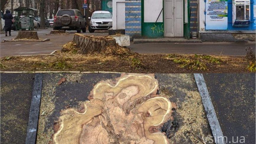 """На Володимирській зрізали """"живі"""" дерева. Чи законно це?"""