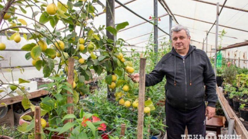У теплицях на Хмельниччині вирощують ківі, лимони, лохину (ФОТО)