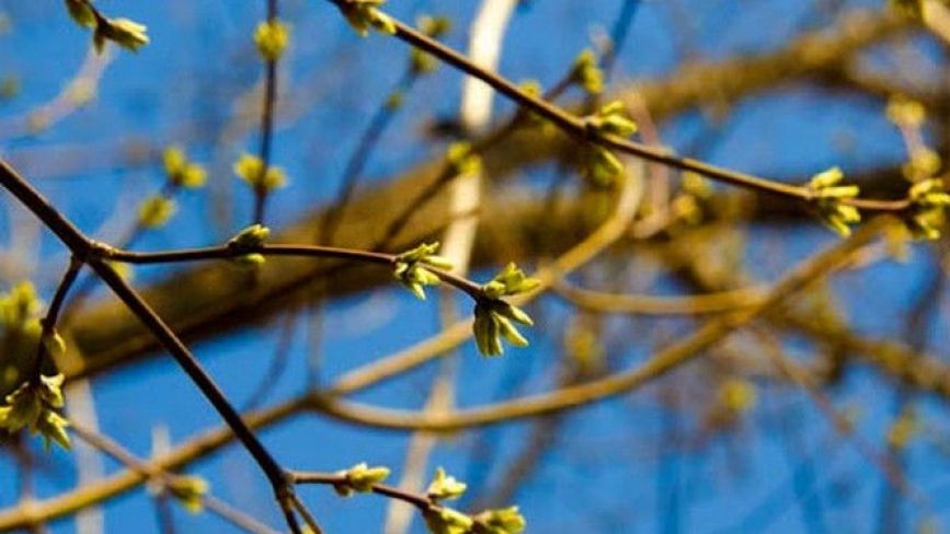 """""""Очікуйте квітневі градуси"""": якою буде погода у перші вихідні лютого"""