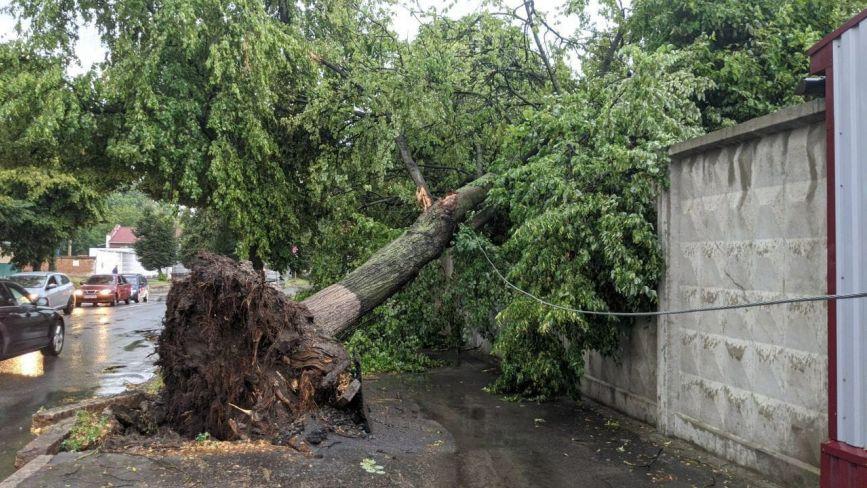 Гроза у Хмельницькому: затоплені вулиці та повалені дерева (ФОТО+ВІДЕО)