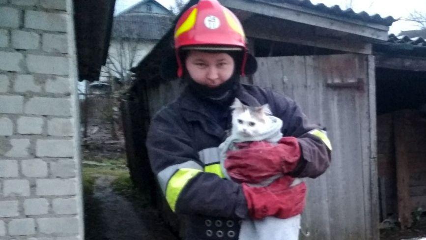 На Хмельниччині з криниці рятували кота (ФОТО)