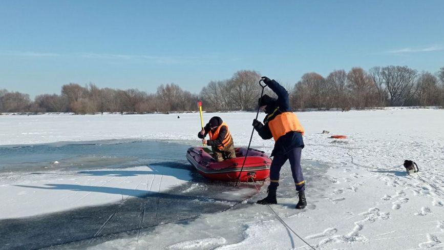 На Хмельниччині рятувальники звільнили лебедів із замерзлого озера