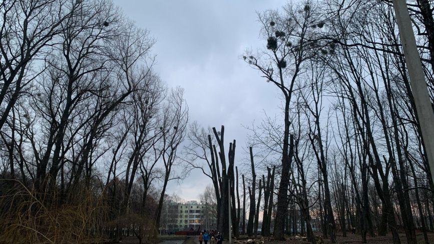 Екологи назвали суму збитків «варварської» обрізки дерев у парку Чекмана
