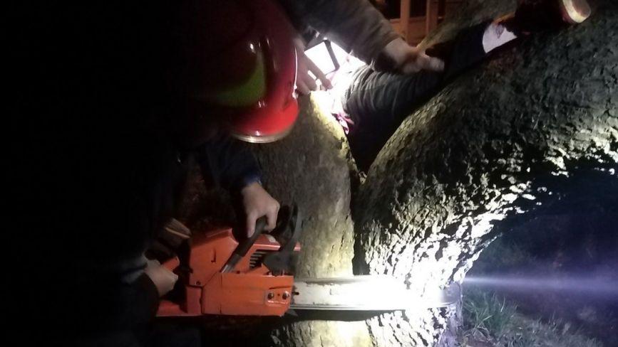 Рятувальники з бензопилою визволяли дитину, яка ногою застрягла між деревами