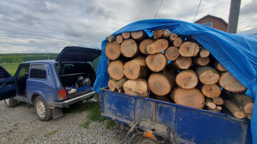 П'ятеро чоловіків незаконно вирубували ліс на Хмельниччині. Їх затримали