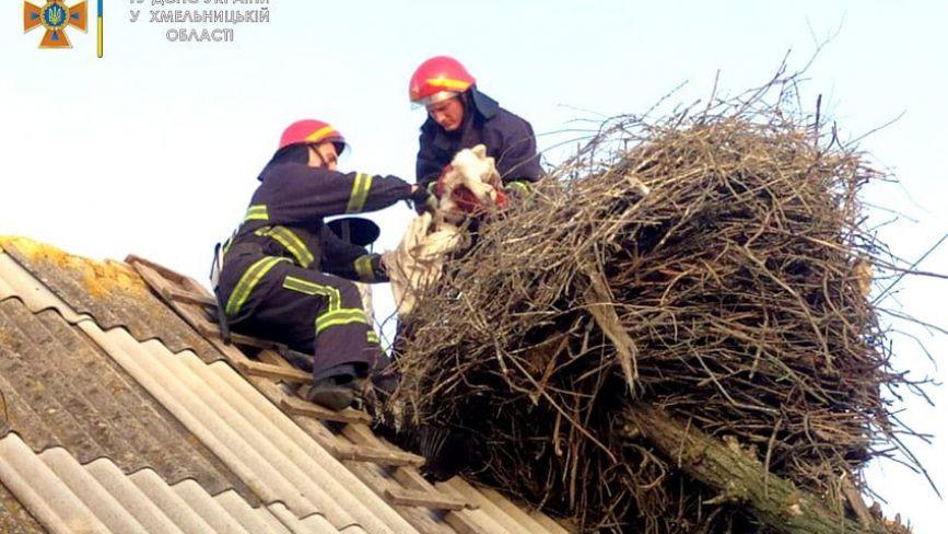 У Хмельницькому районі надзвичайники рятували лелек