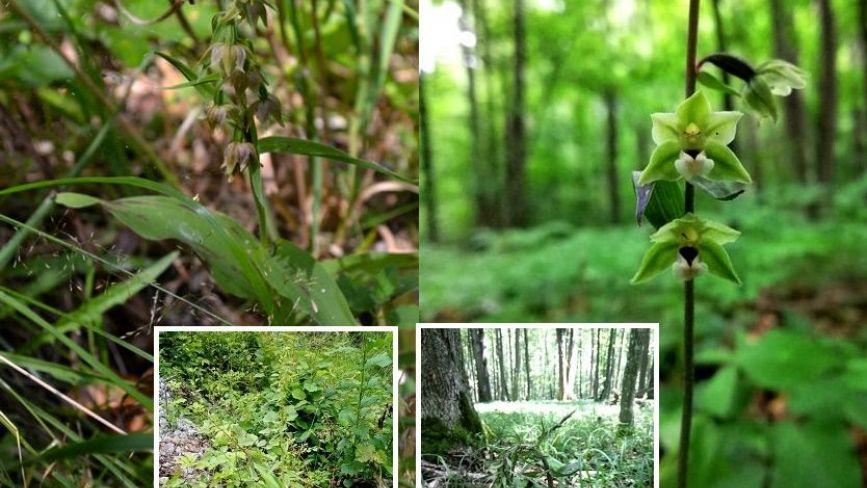 У парку на Хмельниччині розцвіли рідкісні орхідеї (ФОТО)