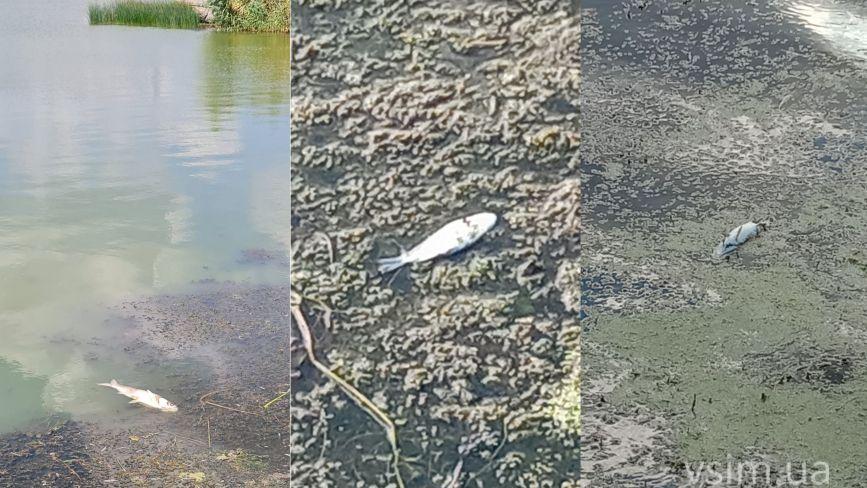 Мертва риба у Південному Бузі: що кажуть чиновник та еколог