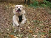 Спеціальні місця для вигулу собак у Хмельницькому не шукають