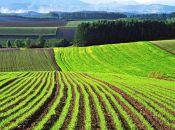 Сергій Лабазюк зареєстрував законопроект, який забороняє іноземцям купувати землю та гарантує фізособам першочергове право на викуп землі (прес-служба Сергія Лабазюка)