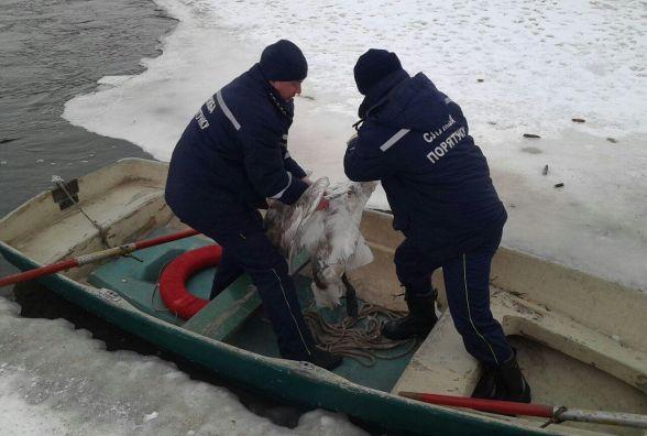 На Хмельниччині рятували лебедя з крижаного озера