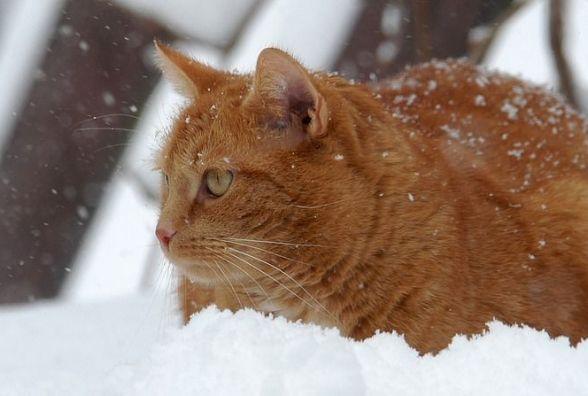 У Хмельницькому 22 січня можливий сніг
