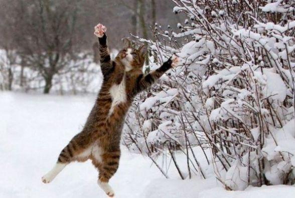 23 січня у Хмельницькому буде ясна погода
