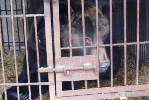 Ведмедя дресирувальниці Марти не можуть забрати до Хмельницького – немає за що