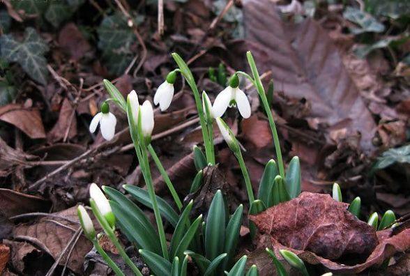 У Хмельницький йде весна. З 18 лютого серйозно потеплішає