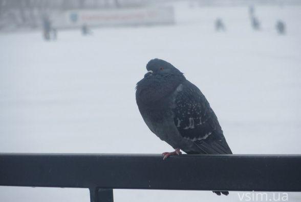 21 лютого у Хмельницькому можливий дощ зі снігом