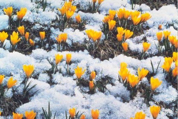 А за вікном - майже весна: завтра, 24 лютого, у Хмельницькому прогнозують до +11