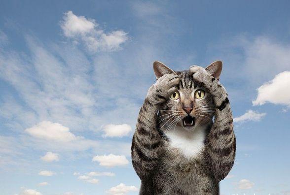 1 березня відзначають Всесвітній день котів