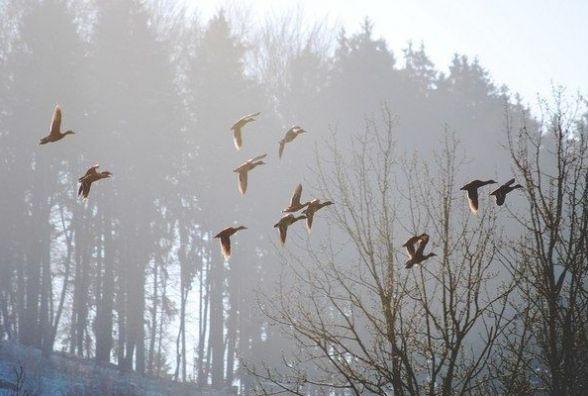 У п'ятницю, 3 березня, в Хмельницькому без опадів