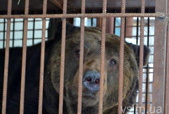 Ведмедя Стефана з хмельницького зоопарку заберуть до «Синевиру»