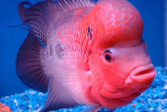 Екзотика в акваріумі: хмельничан запрошують на виставку риб