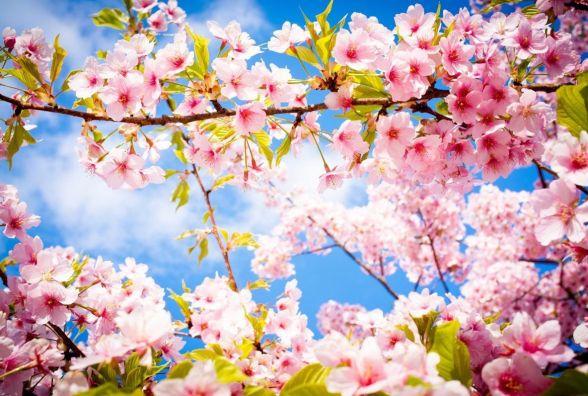 22 березня у Хмельницькому буде сонячно