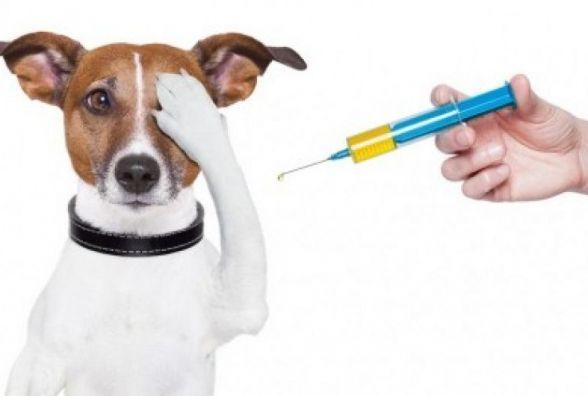 Собак та котів у Хмельницькому щеплюють від сказу безкоштовно