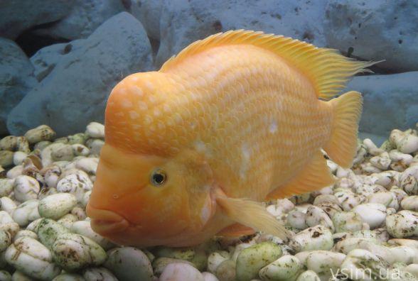 Яскраві рибки, лемур і макака: у Хмельницькому показують екзотичних тварин (ФОТО)