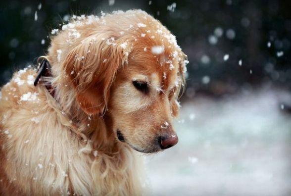 25 березня у Хмельницькому можливий дощ зі снігом