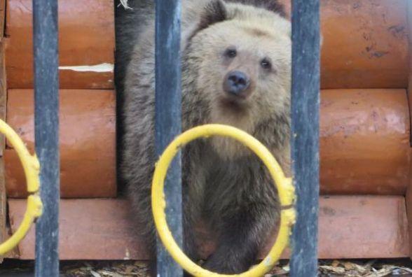 У хмельницькому зоокуточку ведмідь загриз ведмедицю Маргошу