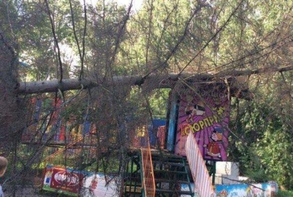 Дерево у парку Чекмана впало через недбалість комунальників