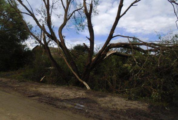 На Хмельниччині негода повалила дерева і порвала дроти