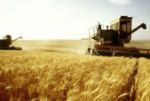 Чи вплине спека на врожай на Хмельниччині