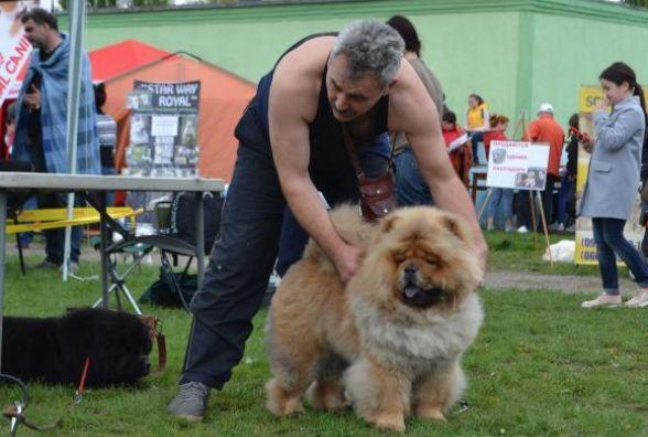 На виставку собак в Головчинцях привезуть більше 600 чотирилапих
