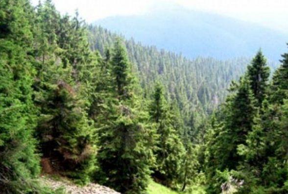 17 вересня відзначають День лісника