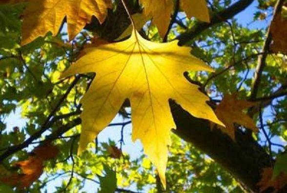 У місті ще буде сонце: погода у Хмельницькому на тиждень