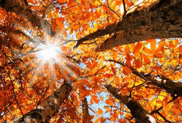 4 жовтня - день Матвія.  Що варто сьогодні зробити, щоб рік був благополучним