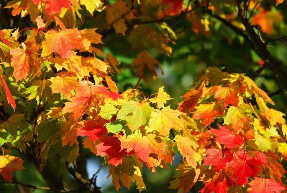 5 жовтня -  Іона. Чому цей день нещасливий та що не варто сьогодні робити