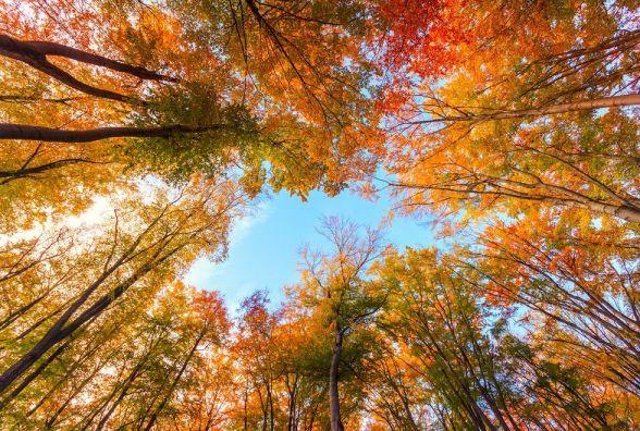 11 жовтня - Миколи. Що сьогодні робити, аби нещастя і хвороби оминали