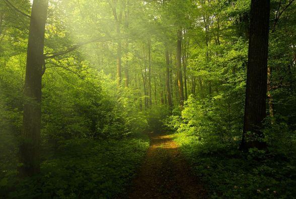 У влади просять про облаштування лісу в Дальніх Гречанах: пропонують музей під відкритим небом