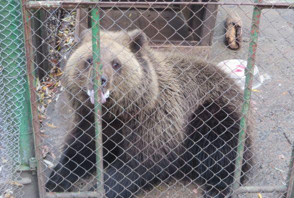 Закупили сіно і переселяють тварин: як у хмельницькому зоокуточку готуються до зими
