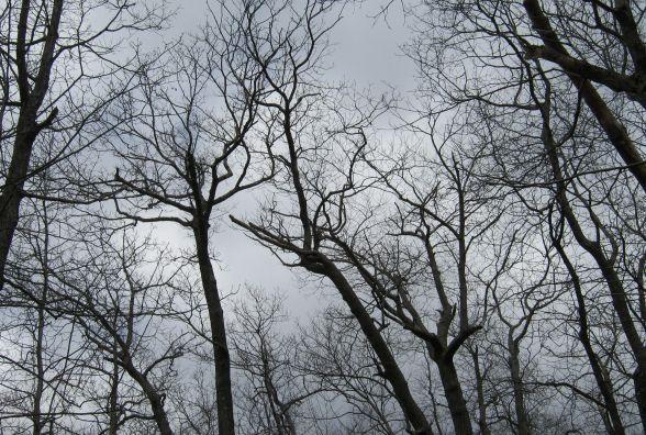 Якої погоди чекати хмельничанам у перший день зими